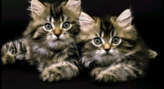 How to treat epilepsy in cats