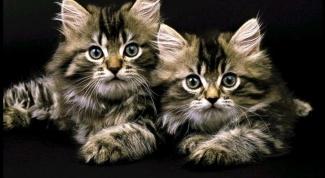 Как лечить эпилепсию у кошек