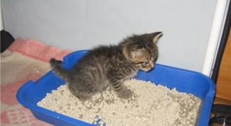 Как приручить котенка к лотку