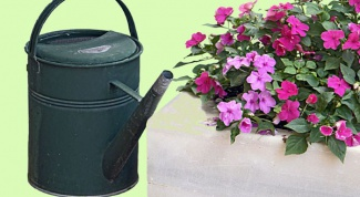Как спасти растение от перелива