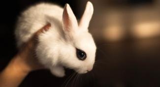 Как лечить понос у кроликов