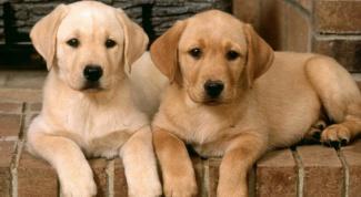 Как избавиться от глистов у собаки