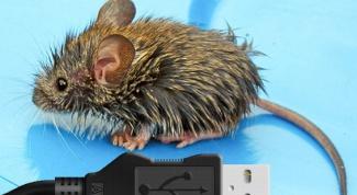 Как подключить usb мышку