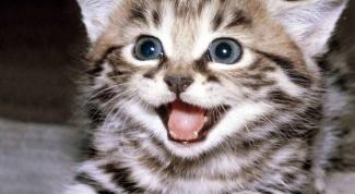 Как отучить котенка грызть провода