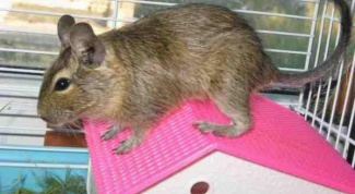 Как приручить мышь