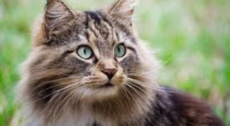 Как обработать рану кошке
