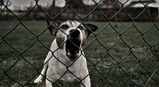 Как побороть страх собаки