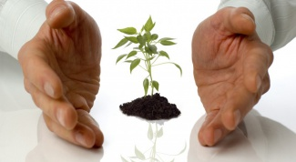 How to get a grant for small business development