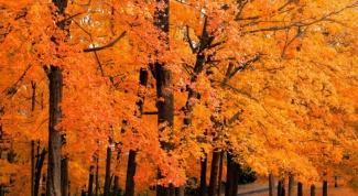 Как написать сочинение об осени