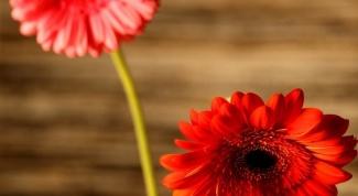 Как плести венки из цветов