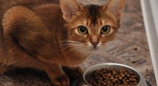 Как приучить кота есть сухой корм