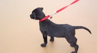 Как приучить собаку ходить рядом