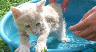 Как искупать котенка