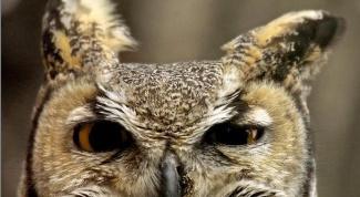 Что делать, если ты сова