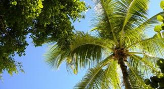 Как обрезать пальму