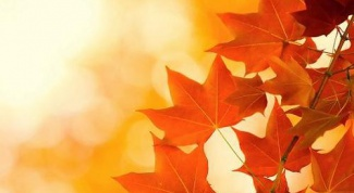 Why leaves turn yellow