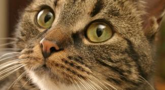 Что делать, когда чихает кот