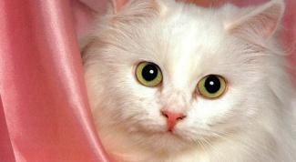 Как отучать кошку гадить по углам