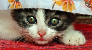 Как удалить запах от кошки