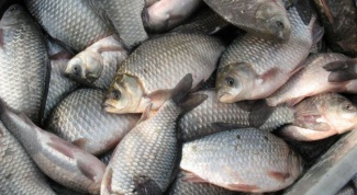 Как солить речную рыбу