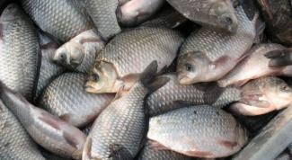 As the salt river fish