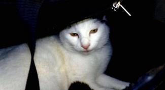 Как сшить переноску для кошки