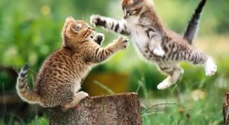 How to treat eyes kitten