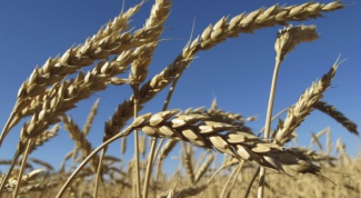 What is made from wheat