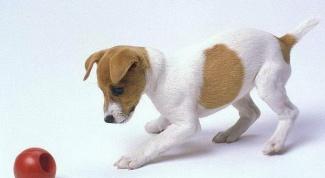Каким должно быть правильное воспитание щенка