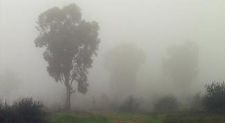 Why formed fog