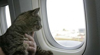 Как вывезти кошку за границу