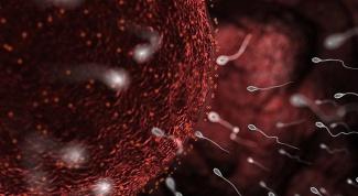 Что делать, если спермограмма плохая