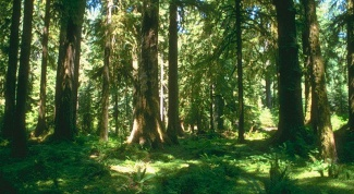Почему нужно защищать леса