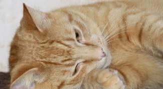 Что делать, если у кошки понос