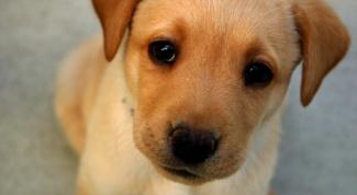 Почему скулит собака