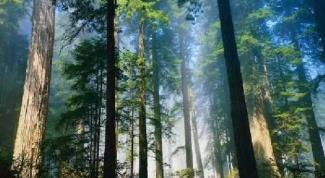 Почему нужно охранять лес