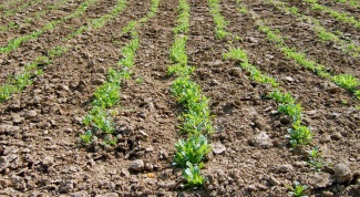 How to keep moisture in the soil