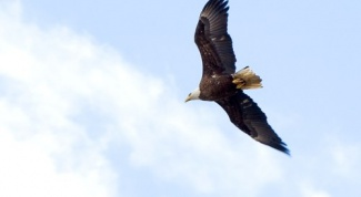 Почему падают птицы