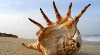 Why shells make noise