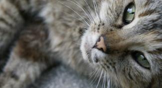 Почему кошки спят в ногах
