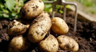 Why potatoes turn black