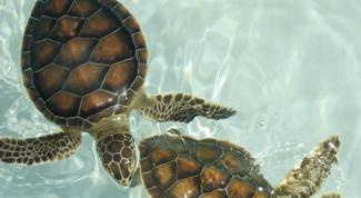 Как оборудовать аквариум для черепах