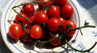 Tomatoes: how to grow your own