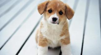 Как отучить собаку писать в квартире