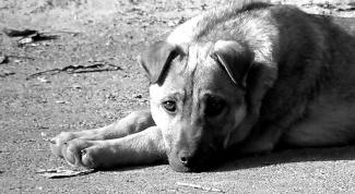 Как избавиться от бездомных собак