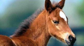 Как выращивать лошадей