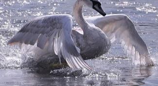 Как сделать костюм лебедя
