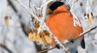 Как сделать кормушку для птиц из бумаги