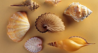 How to make crafts from shells
