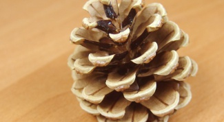 Как сделать елку из шишек
